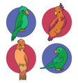 set of 4 parrots and cockatoo vector image