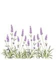 Wreath of lavender flowers vector image