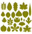 set of green leaves from different trees vector image