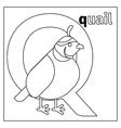 Quail letter Q coloring page vector image