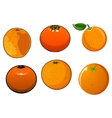 isolated ripe and juicy orange fruits vector image