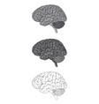 human brain gray vector image
