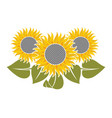 flowers of sunflower vector image