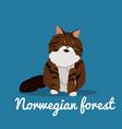 norwegian forest cute cat animal vector image