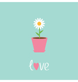 Daisy in pot Love card vector image
