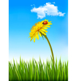 Dandelion on a blue sky and green grass background vector image