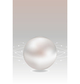 realistic pearl vector image vector image