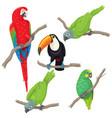 tropical birds set vector image