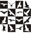 Black and white background with gulls vector image vector image