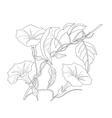 Bindweed Sketch black and white vector image