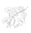 Bindweed Sketch black and white vector image