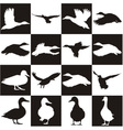 Black and white background with Mallards vector image vector image
