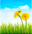 Two yellow dandelions with a ladybug on a nature vector image