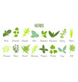 big icon set of flat culinary herbs sage thyme vector image