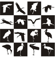 Black and white background with storks vector image