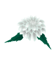 White Dahlia Flower on A White Background vector image