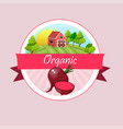 whole ripe vegetables red beet vector image