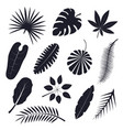 tropical palm leaves black silhouettes set vector image