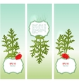 Set of summer banners vector image vector image