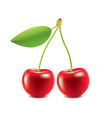 Cherry isolated on white vector image