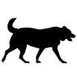 labrador dog silhouette on a white background vector image