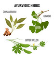 ayurvedic herbs set of plant branches isolated on vector image