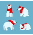 Cartoon Cute Polar Bear Animal vector image
