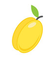 apricot flat icon fruit and diet vector image