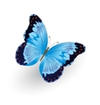 Bright blue butterfly isolated vector image