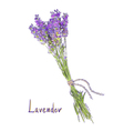Hangs Lavender bunch with a jute rope Sketch with