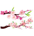 cherry blossom flowers on branches vector image