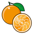 Orange isolated on a white background vector image