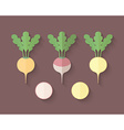 A set of Vegetables in a Flat Style - Turnip and vector image