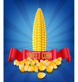 grains and cobs of corn and red ribbon vector image vector image
