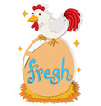 Chicken and fresh egg vector image