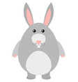cute rabbit with gray fur vector image