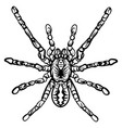 zentangle stylized halloween spider sketch vector image