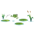 A frog at the pond with waterlilies vector image