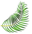 green leaf of palm tree isolated on white vector image