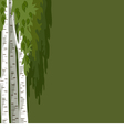 Green background with birches vector image