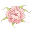 Flower - Pink peony vector image vector image