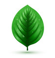 rrealistic green leaf isolated on a white vector image