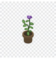 isolated flowerpot isometric flower vector image