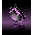 Bright pink butterfly isolated on black background vector image