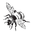 engraving flying bee isolated on white background vector image