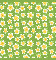 White and yellow plumeria flowers on green vector image