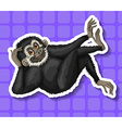 Black gibbon scratching his head vector image