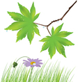 maple leaves grass and a flower vector image