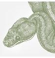 snake head green boa vector image