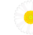 Daisy flower background vector image